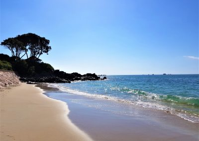Green Island Jersey